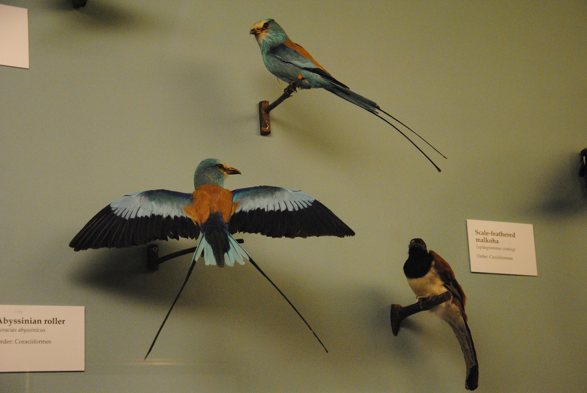 museums londenDSC_0294
