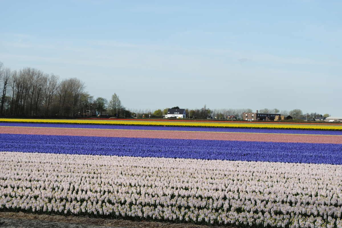 Uittips in Nederland