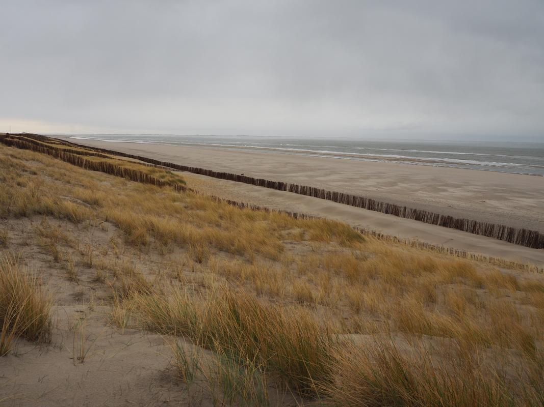 Fossielenexpeditie Maasvlakte Rotterdam P1155818